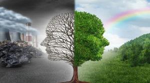 Экология среды