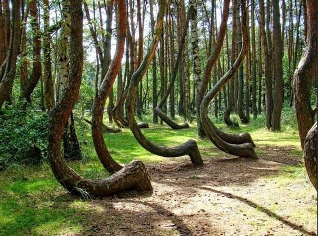Лес на Курской косе