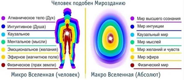 Структура человека
